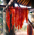 King Salmon Fish Meat Catch Hanging Native American Lodge Drying - PhotoDune Item for Sale