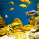 Coral Fish 5 - VideoHive Item for Sale