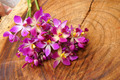 Purple orchid (Spathoglottis ) on wood. - PhotoDune Item for Sale