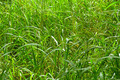 Wild Jungle Grass - PhotoDune Item for Sale