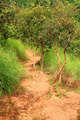 Vibrant Jungle Trail - PhotoDune Item for Sale