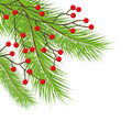 Christmas tree on white background - PhotoDune Item for Sale