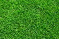 Green grass background texture. - PhotoDune Item for Sale