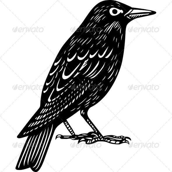 GraphicRiver Blackbird 6121247
