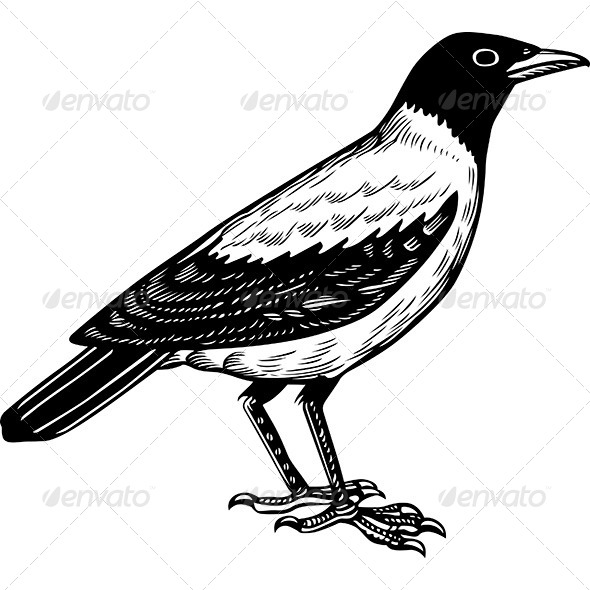 GraphicRiver Crow 6121273