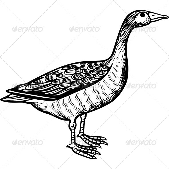 GraphicRiver Goose 6121312