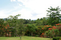 Landscape of Khao yai is a UNESCO World Heritage Site, Thailand - PhotoDune Item for Sale