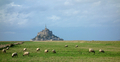 Flock of Sheep at Mont Saint Michel in France - PhotoDune Item for Sale