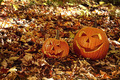 Funny pumpkins in leaves on the ground - PhotoDune Item for Sale