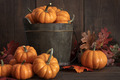 Tiny pumpkins in wooden bucket on table - PhotoDune Item for Sale