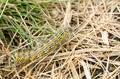 Hairy yellow caterpillar - PhotoDune Item for Sale