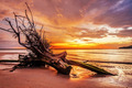 Dead tree trunk on tropical beach - PhotoDune Item for Sale