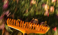 Motion blur on orange lawn rake leaves - PhotoDune Item for Sale