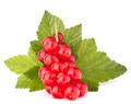 Red currants and green leaves still life - PhotoDune Item for Sale