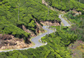 winding road between tea plantations - PhotoDune Item for Sale