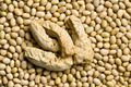 soybeans and soy meat - PhotoDune Item for Sale