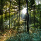 Sun rays in the forest - PhotoDune Item for Sale