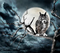Owl On A Tree At Night - PhotoDune Item for Sale