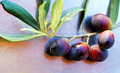 Ripe olives on branch - PhotoDune Item for Sale