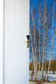 open door and a winter forest - PhotoDune Item for Sale