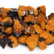 Chaga - birch mushroom - PhotoDune Item for Sale