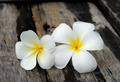 Tropical flowers frangipani on wood - PhotoDune Item for Sale