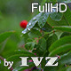 Wild Berry - VideoHive Item for Sale