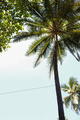 Beach Coconut Tree - PhotoDune Item for Sale