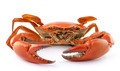 sea crab isolated on white background - PhotoDune Item for Sale