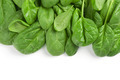 fresh green leaves spinach - PhotoDune Item for Sale