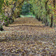 tunnel of leaves with a small road to infinity in November - PhotoDune Item for Sale