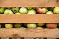 Apples in a wooden box - PhotoDune Item for Sale