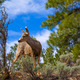 Elk Deer grazing in Arizona Grand Canyon Park - PhotoDune Item for Sale