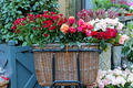 Basket of Roses - PhotoDune Item for Sale