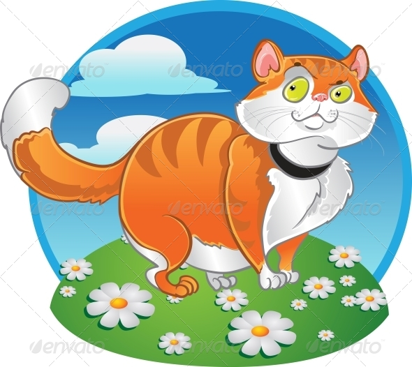 GraphicRiver Orange Fat Cat on the Color Background 6265551
