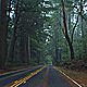 Forest Drive - VideoHive Item for Sale