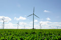Wind turbines on a field - PhotoDune Item for Sale