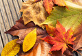 Maple leave in autumn season - PhotoDune Item for Sale