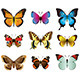 Butterflies Photo-Realistic Vector Set - GraphicRiver Item for Sale