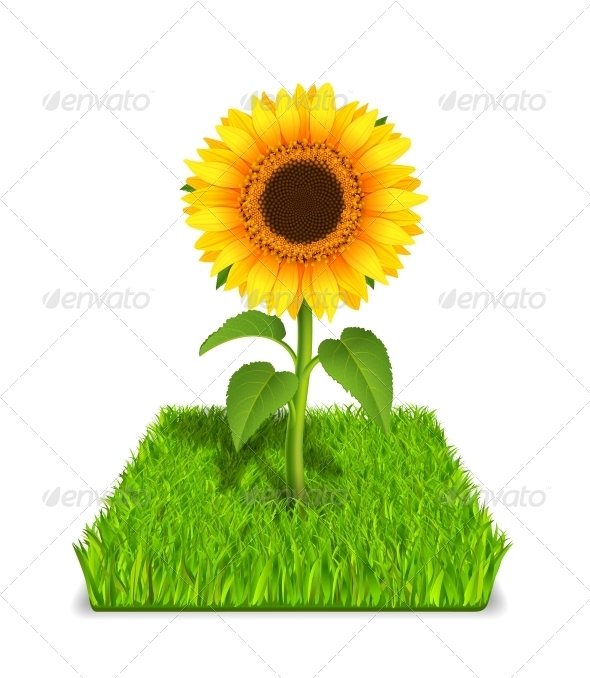 GraphicRiver Sunflower in the Green Grass 6295591