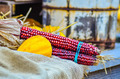 indian decorative corn on farm display - PhotoDune Item for Sale