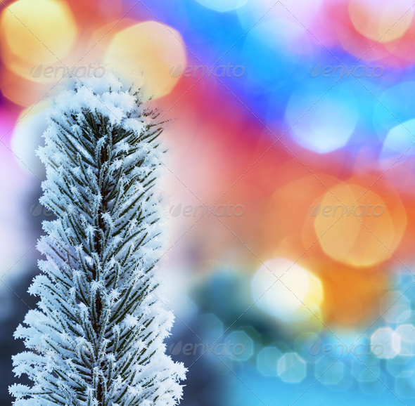 Frozen tree - Stock Photo - Images
