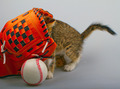Cat and baseball - PhotoDune Item for Sale