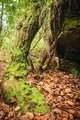 Moss covered wooden in rains forest. - PhotoDune Item for Sale