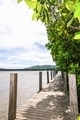 Wooden bridge around mangrove. - PhotoDune Item for Sale
