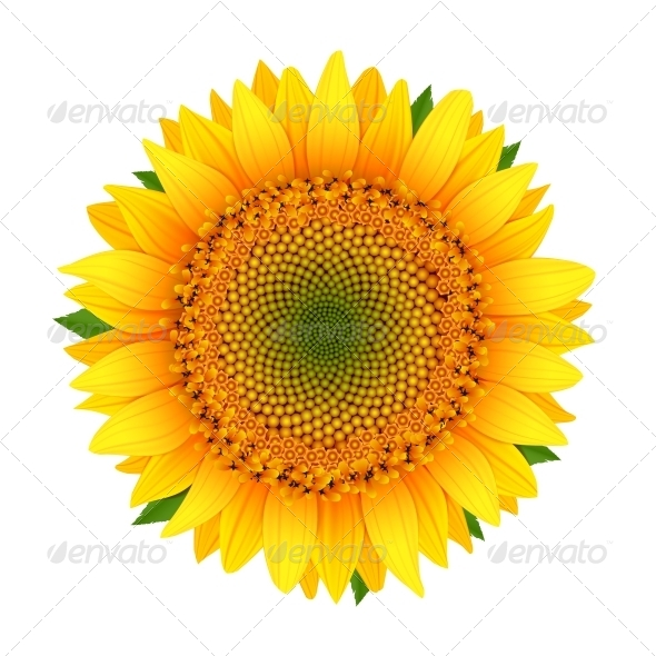 GraphicRiver Sunflower isolated on white 6329201