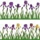 Flowers Iris and Grass, Set Seamless - GraphicRiver Item for Sale