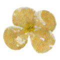 Flower decoration - PhotoDune Item for Sale