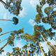 pine trees photographed on a fisheye lens - PhotoDune Item for Sale