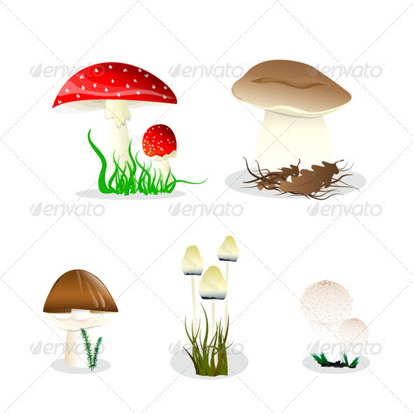GraphicRiver Set of the Mushrooms 6343329